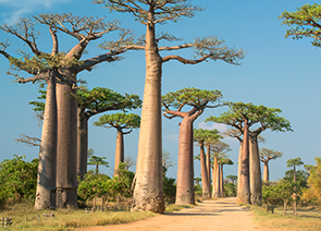 About African Travel